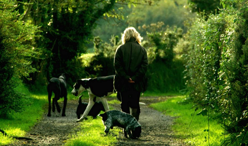Woman walking her dogs in a forested area.