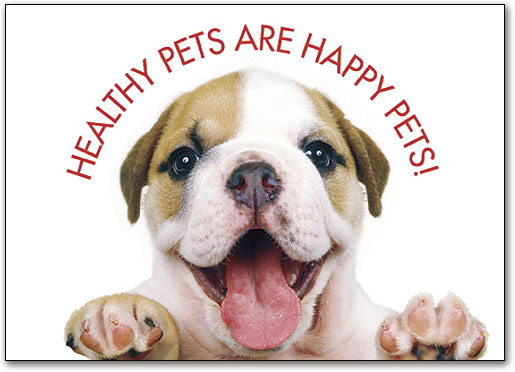happy-bulldog-smiling-about-happy-pets-and-healthy-pets