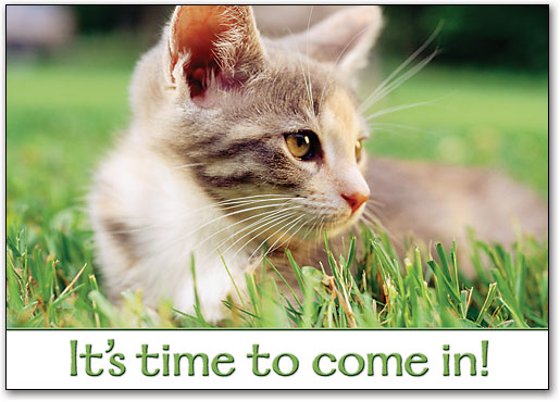 kitten-in-the-grass-saying-it's-time-to-go-into-the-vet