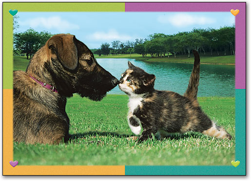 dog-and-kitten-in-a-field-reminder-postcard