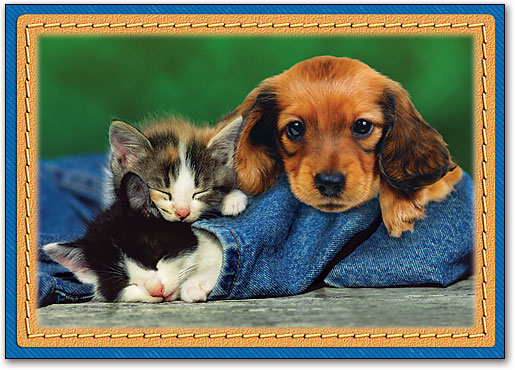 kittens-and-puppy-cuddling-on-jeans