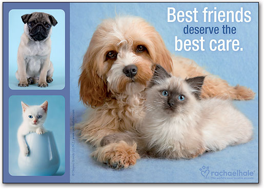 kitten-cat-and-dog-best-friends-laying-down