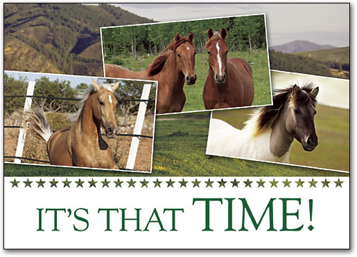 Different-horses-saying-it's-time-for-a-veterinary-appointment