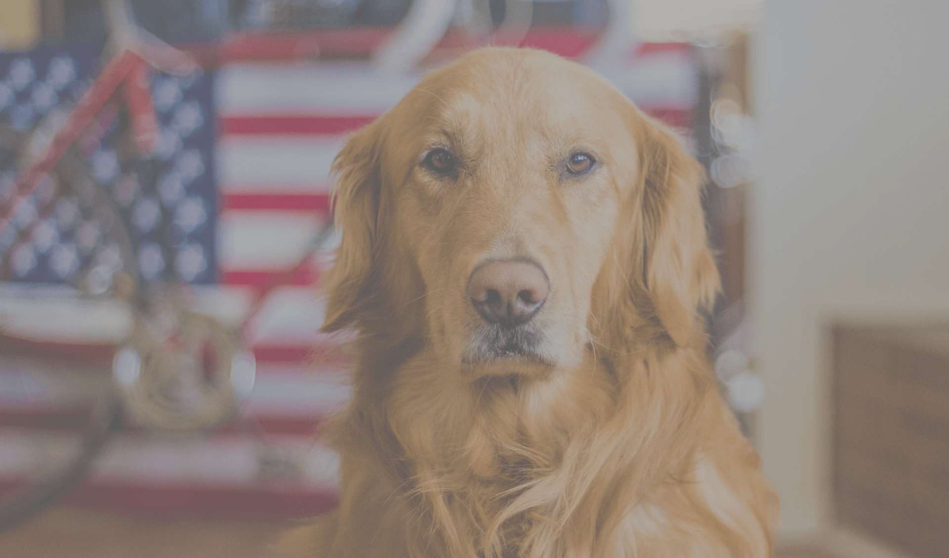6 Tips to Keep Pets Safe This 4th of July Holiday