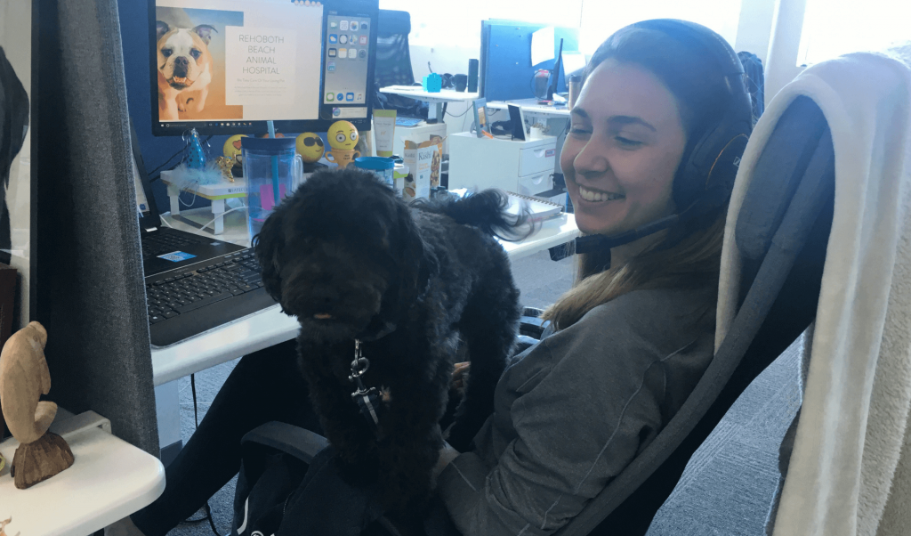 Small black poodle sitting on womans lap in an office.