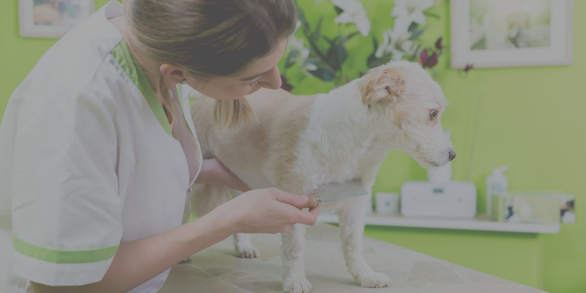 Five Ready-To-Go Social Media Posts for Flea and Tick Season